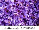 Flowers Of Saffron After...