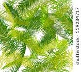 palms seamless background.... | Shutterstock .eps vector #559234717
