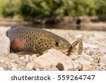 Small photo of Fish goldilocks fishing
