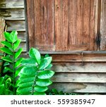 crop of old wood wall tree and... | Shutterstock . vector #559385947