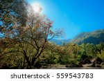 forest trees and blue sky   Shutterstock . vector #559543783