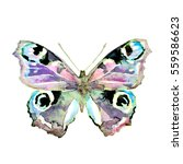 butterfly  watercolor  isolated ... | Shutterstock . vector #559586623
