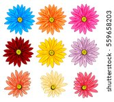 Vector Set Of Colorful Gerbera...