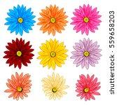 Vector Set Of Colorful Gerbera...