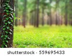 Forest Trees. Nature Green Woo...