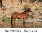 Nice Brown Horse Standing In...