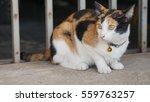 Three Colored Cute Cat Lying O...