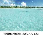 palms on caribbean beach ... | Shutterstock . vector #559777123