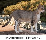 cats on street | Shutterstock . vector #55983640
