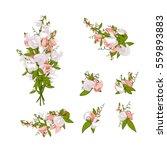 flowers bouquet   summer... | Shutterstock .eps vector #559893883