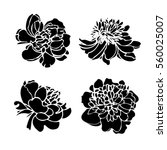Stock vector set of four vector silhouettes of hand drawn peony flowers isolated on white background 560025007