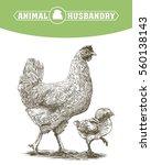 chicken breeding. animal... | Shutterstock .eps vector #560138143
