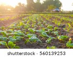 organic vegetable garden future ... | Shutterstock . vector #560139253