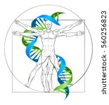 dna vitruvian man medical... | Shutterstock .eps vector #560256823