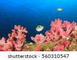 fish school coral reef... | Shutterstock . vector #560310547