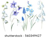watercolor floral set spring... | Shutterstock . vector #560349427