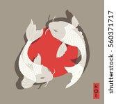 two carp koi fish swimming...   Shutterstock .eps vector #560371717