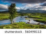 Great Moor Of Rannoch  Scotlan...