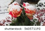 Roses In The Snow On A Grave