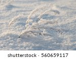Snow Covered Plants On A...