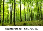 sunlight in the green forest ... | Shutterstock . vector #56070046
