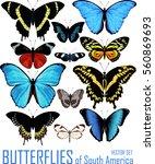 vector set of butterflies of... | Shutterstock .eps vector #560869693