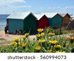 yellow flowers on the beach ... | Shutterstock . vector #560994073