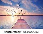 calm summer evening  wooden...   Shutterstock . vector #561020053