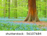 a tree amongst blue bells - stock photo