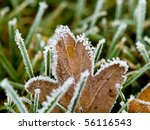 Frost Covered Leaves On A...