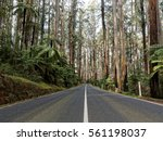 Maroondah Highway Healesville...