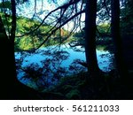 view through the trees lakeside ... | Shutterstock . vector #561211033