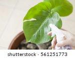 spraying indoor plant | Shutterstock . vector #561251773