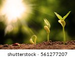 agriculture and and plant... | Shutterstock . vector #561277207