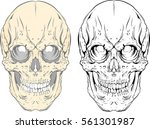 graphic skull vector tattoo... | Shutterstock .eps vector #561301987