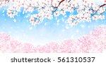 cherry spring flower background | Shutterstock .eps vector #561310537