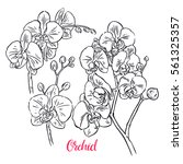 set of beautiful sketch orchids.... | Shutterstock .eps vector #561325357