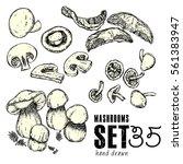 hand drawn mushrooms set.... | Shutterstock .eps vector #561383947