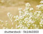 white flowers in soft color and ... | Shutterstock . vector #561463303