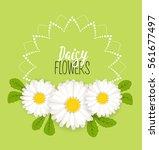 vector illustration of daisies  ...   Shutterstock .eps vector #561677497