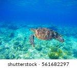 wild sea turtle in water.... | Shutterstock . vector #561682297