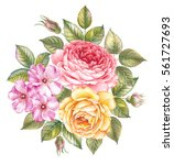 Blooming Rose Flower Watercolo...