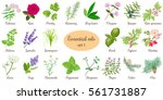 Big Vector Set Of Popular...