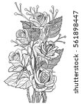 rose flowers coloring book page.... | Shutterstock .eps vector #561898447