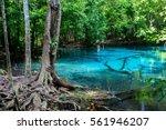sra morakot blue pool at krabi... | Shutterstock . vector #561946207