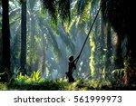 jan 22  2017  kedah  malaysia   ... | Shutterstock . vector #561999973