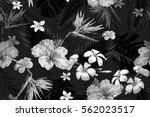 beautiful seamless vector... | Shutterstock .eps vector #562023517