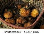 Jungle Durian Fruit In Rattan...