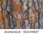 Old Wood Bark Texture Or...