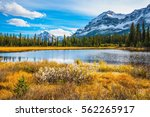 pine trees reflected in the... | Shutterstock . vector #562265917